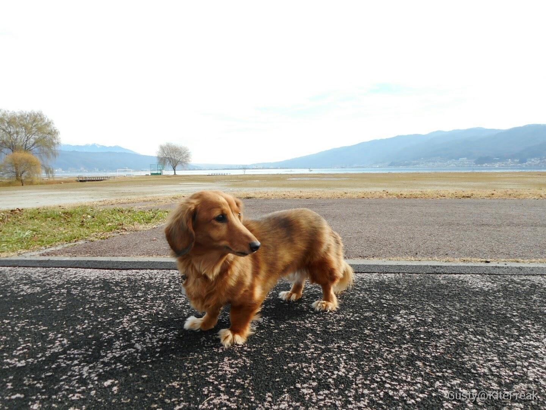 風と犬と写真と